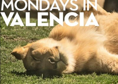 Mondays in Valencia's Bioparc